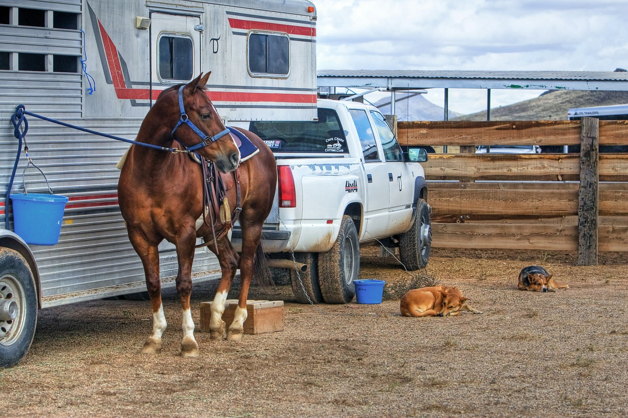 trailer your horse correctly