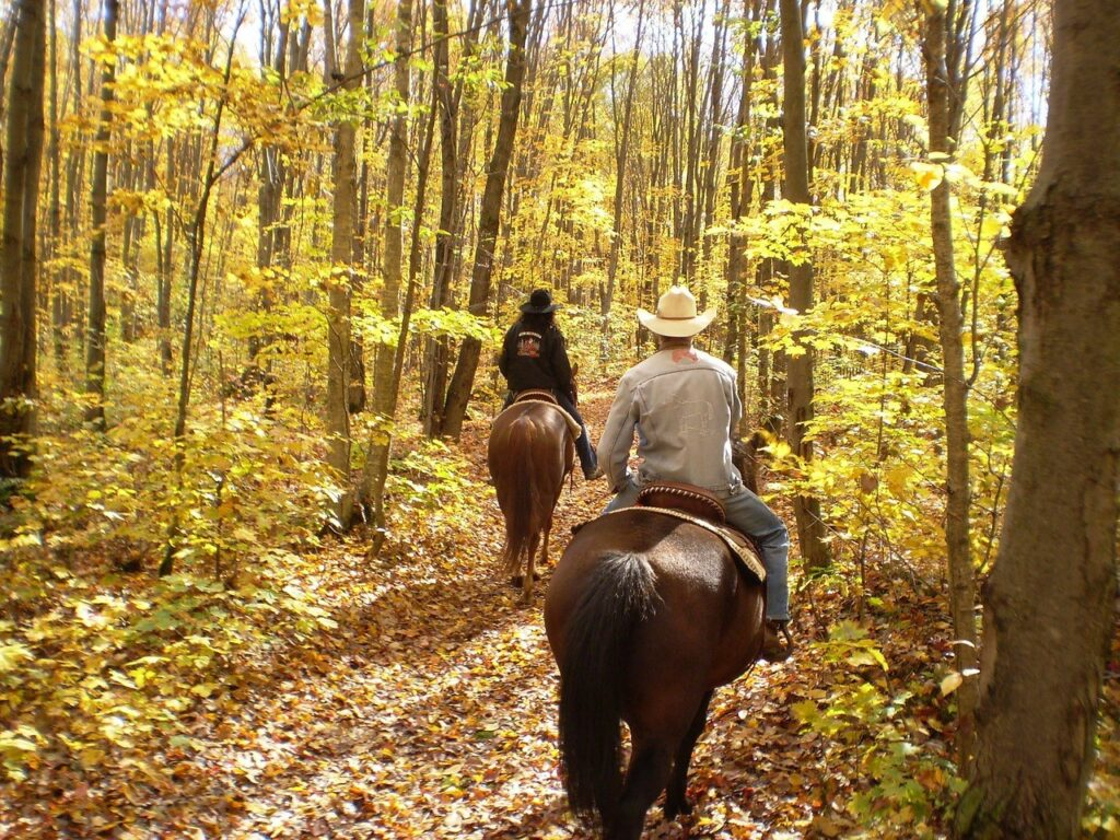 two people riding horseback through a forest
