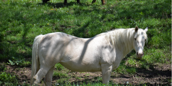 Horses with Metabolic Issues | Groundmaster